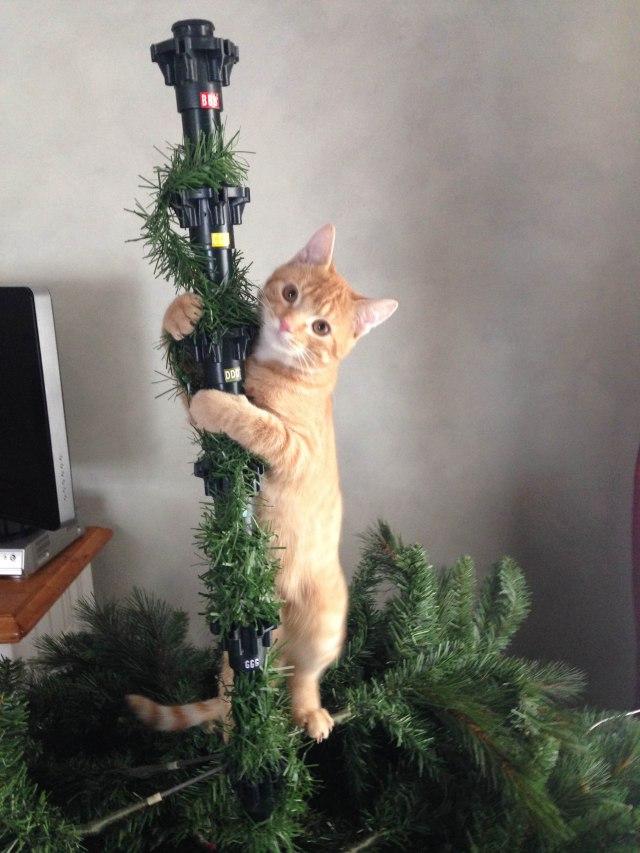 my tree!